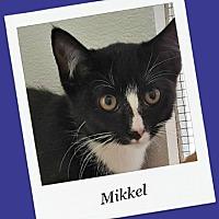 Adopt A Pet :: Mikkel - Tombstone, AZ