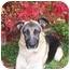 Photo 4 - German Shepherd Dog Dog for adoption in Rochester/Buffalo, New York - Whiskey