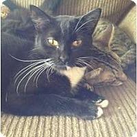 Adopt A Pet :: Ariel - Wenatchee, WA