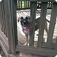 Adopt A Pet :: Trixie - Bridgewater, NJ