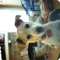 Adopt A Pet :: Knox - New Washington, IN