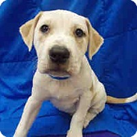 Adopt A Pet :: Suzanna ADOPTED!! - Antioch, IL