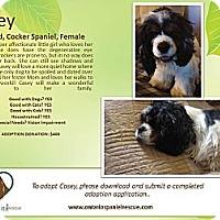 Adopt A Pet :: Casey - Ottawa, ON