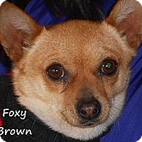 Adopt A Pet :: Foxy Brown - Arenas Valley, NM