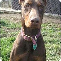 Adopt A Pet :: Bruce--adopted!! - New Richmond, OH