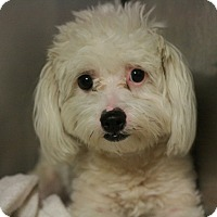 Adopt A Pet :: Ryan - Canoga Park, CA