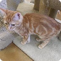 Adopt A Pet :: Autumn - Lake Charles, LA
