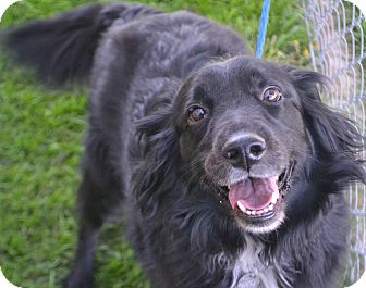 Border Collie Mix Dog for adoption in Fruit Heights, Utah - Scrappy