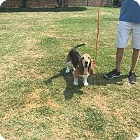 Adopt A Pet :: Dreyfus - Northport, AL