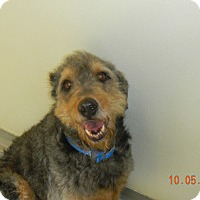 Adopt A Pet :: SCOUT - Sandusky, OH