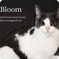 Adopt A Pet :: Bloom - Ortonville, MI
