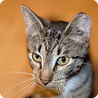 Adopt A Pet :: Adam - Brooklyn, NY
