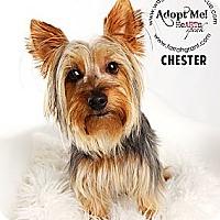 Adopt A Pet :: Chester-Pending Adoption - Omaha, NE