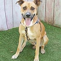Adopt A Pet :: Buddy - Inverness, FL