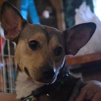 Adopt A Pet :: REX - troutman, NC
