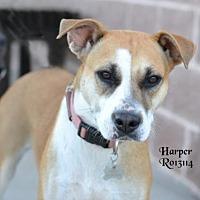 Adopt A Pet :: Harper - Montgomery, TX