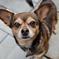 Adopt A Pet :: Gus - Charlotte, NC