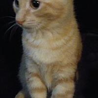 Adopt A Pet :: Link - North Highlands, CA