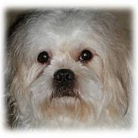 Adopt A Pet :: Skeeter - Beachwood, OH