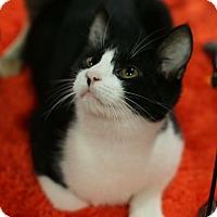 Adopt A Pet :: Sammy - McDonough, GA