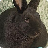 Adopt A Pet :: Colbert - Santa Barbara, CA