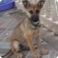 Adopt A Pet :: Yoga - El Cajon, CA