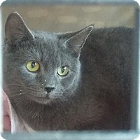 Adopt A Pet :: Grayson - East Brunswick, NJ