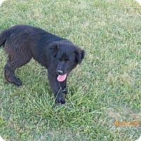 Adopt A Pet :: Jesse - Boston, MA