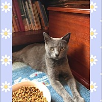 Adopt A Pet :: Sadie - Canton, OH
