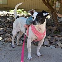 Adopt A Pet :: Chloe - Tucson, AZ