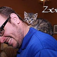 Adopt A Pet :: Zell - Media, PA