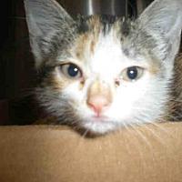 Adopt A Pet :: *SUNNY - Austin, TX
