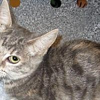 Adopt A Pet :: 361245 - Wildomar, CA