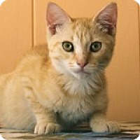 Adopt A Pet :: Marmaduke - Atlanta, GA