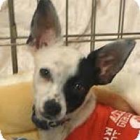 Adopt A Pet :: Turbo - Phoenix, AZ