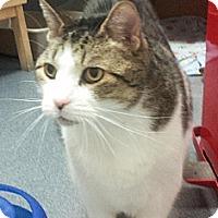 Adopt A Pet :: Arturo - Herndon, VA