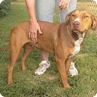 Adopt A Pet :: Sadie - Childress, TX
