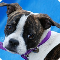 Adopt A Pet :: Bambi - Providence, RI