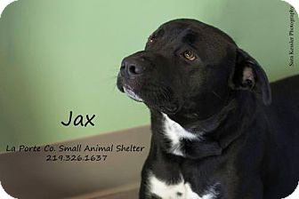 Pit Bull Terrier Mix Dog for adoption in La Porte, Indiana - Jax
