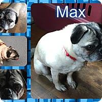 Adopt A Pet :: Max - Walled Lake, MI