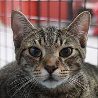 Adopt A Pet :: Hawthorne - Sarasota, FL