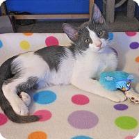 Adopt A Pet :: Matthew - Glendale, AZ
