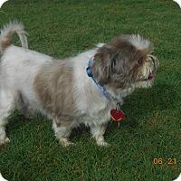 Adopt A Pet :: gizmo - haslet, TX