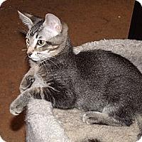 Adopt A Pet :: One-of-a-kind Bree - Scottsdale, AZ