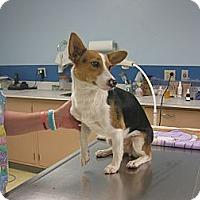 Adopt A Pet :: Savanah - Inola, OK