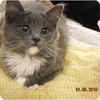 Adopt A Pet :: Muffy - Riverside, RI