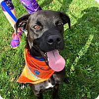 Adopt A Pet :: Dugan - in Maine - kennebunkport, ME