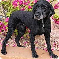 Adopt A Pet :: Thai - Gilbert, AZ