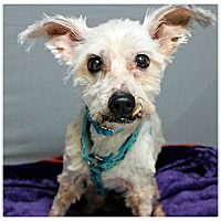 Adopt A Pet :: Puffer - Forked River, NJ