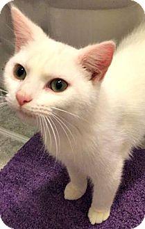 Domestic Mediumhair Kitten for adoption in Eden, North Carolina - Casper